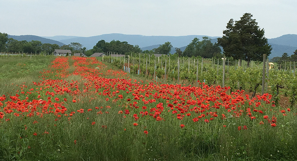 flowers and the vineyard