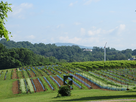 Vineyards, mountains and sculpture