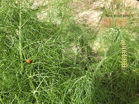 lady bug and catepillar