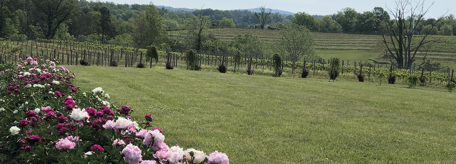 Flowers lining the vineyard