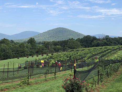 beautiful vineyard setting